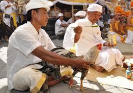 Tradisi Dan 7 Rahasia Menang Sabung Ayam Di Indonesia