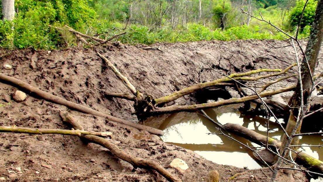 Inside a beavers dam - photo#47