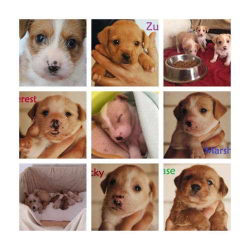 cachorros talla pequena mediana