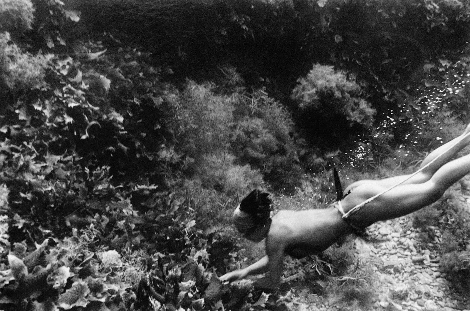 Traditional ama divers usually wore only a fundoshi (loincloth).