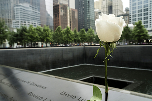 image of a white rose in foreground of 9/11 memorial