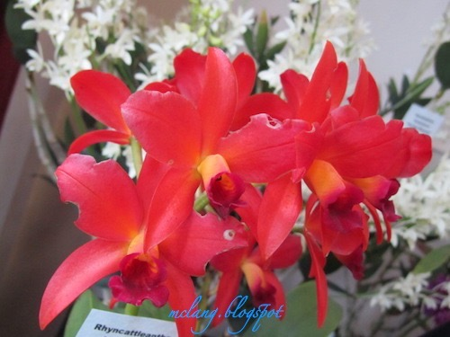 Attractive Orchids
