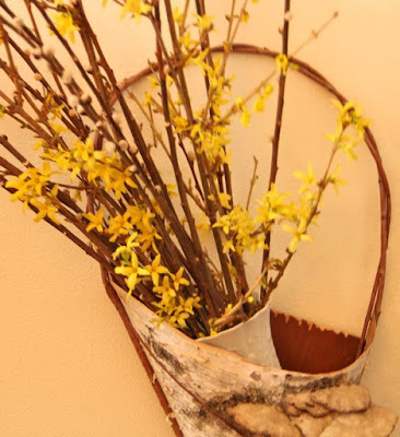 forsythia branches in birch bark wall hanging