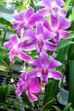Contoh Teks Laporan Hasil Observasi Tentang Bunga Melati Beserta Strukturnya Kumpulan Contoh Laporan