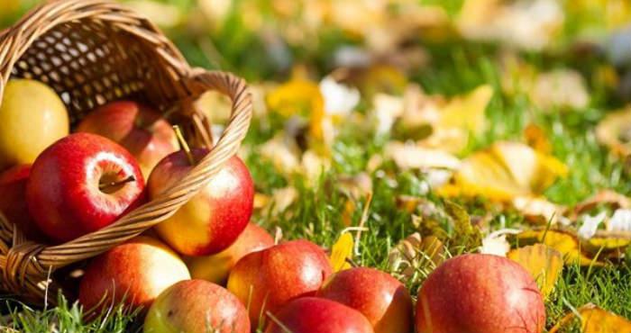 Manfaat Apel Bagi Kesehatan Tubuh