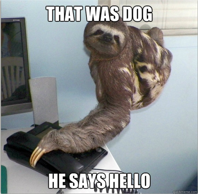 30 funny animal captions (30 pics) - Funny Photos | Funny ...
