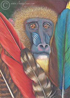 Monkey behind the Feathers