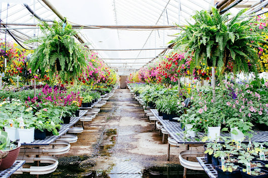 Hunting For Happy: Groth's Country Gardens