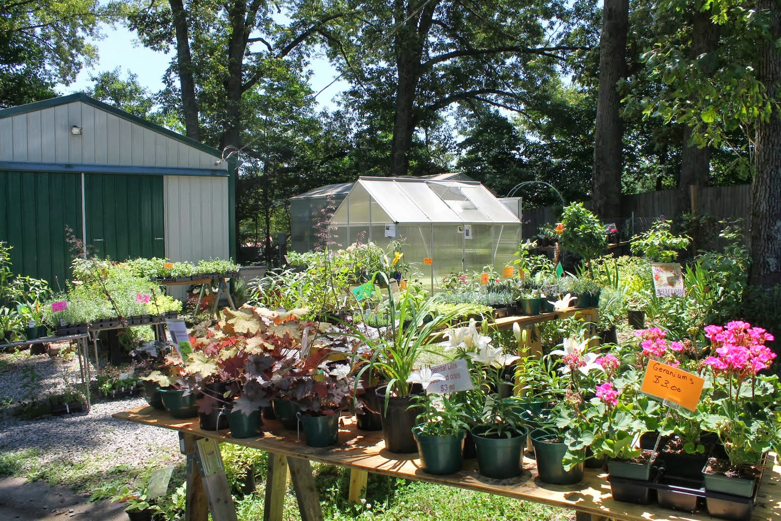 Plant Sale at Mimi's Greenhouse