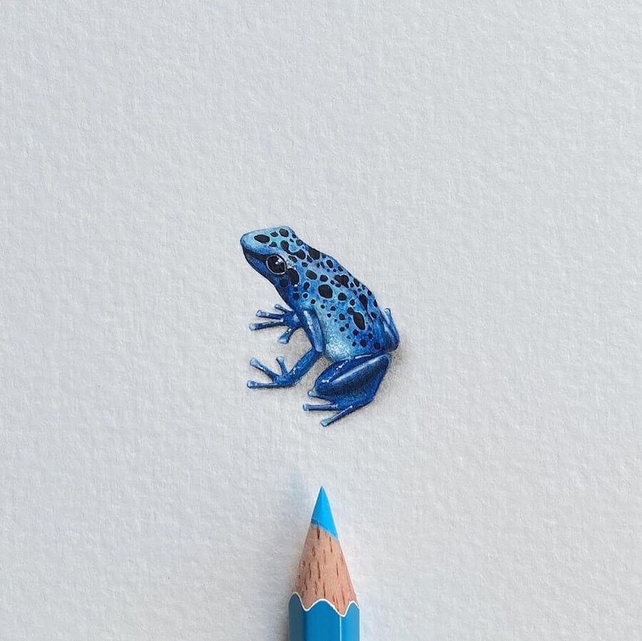 04-Blue-poison-arrow-frog-Lorraine-Loots-Tiny-Art-www-designstack-co