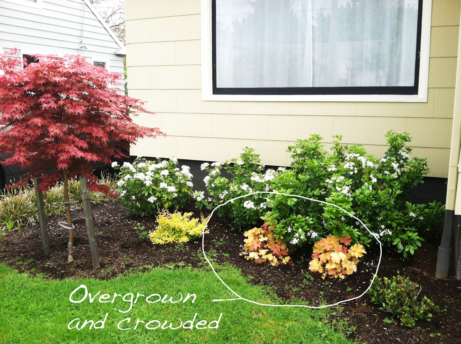 Front Yard Landscaping Plants And Shrubs Landscape Ideas