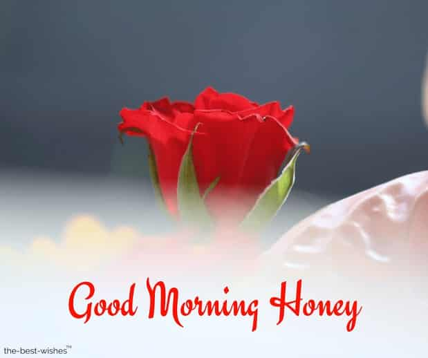 images of good morning honey