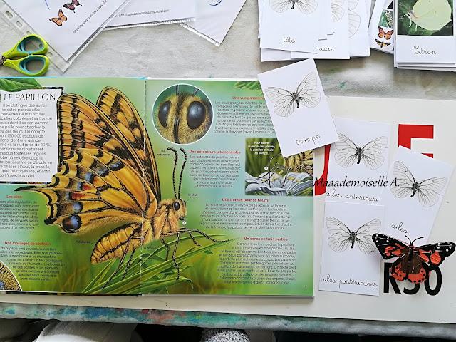Les papillons Editions Fleurus, cycle de vie du papillon Insect Lore, cartes de nomenclature sur l'anatomie du papillon Maaademoiselle A. Shop