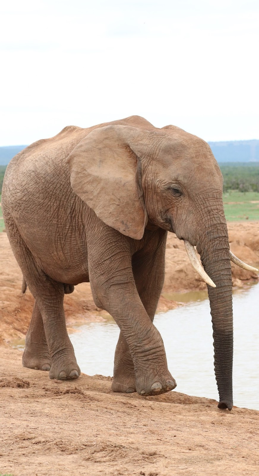An elephant near a water hole.