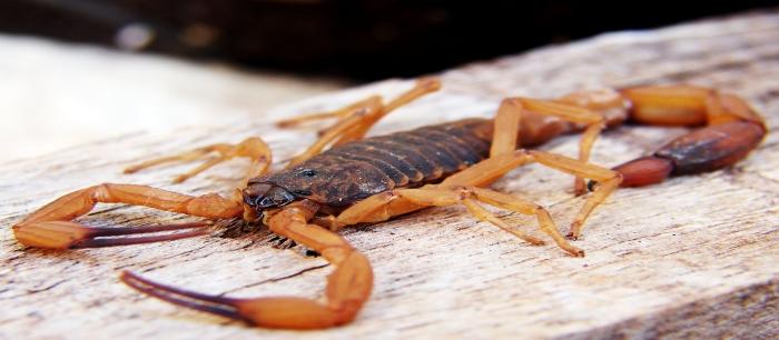 Skorpiony to nie automaty do zabijania