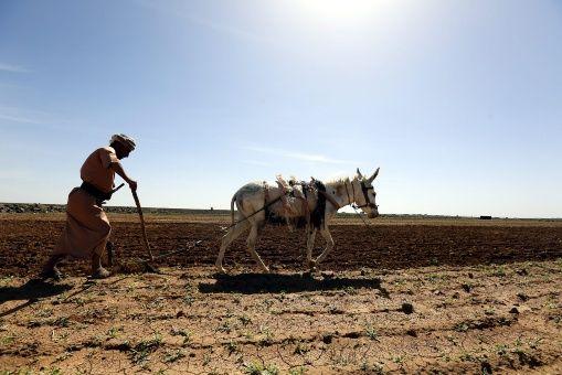 FAO pide mil millones de dólares para combatir el hambre