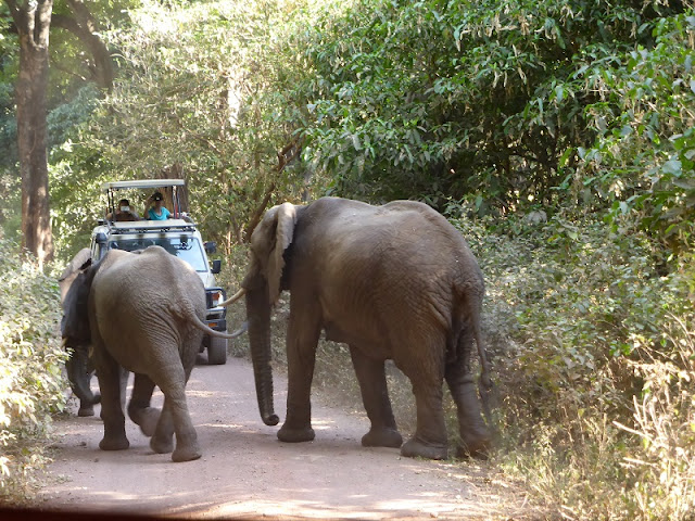 Elefantes en el camino en el Lago Manyara