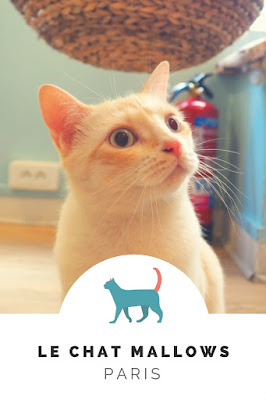 le chat mallows cat café in paris