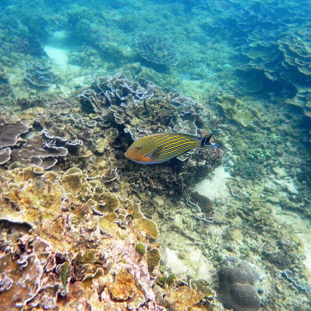 foto indahnya taman bawah laut pantai tiga warna