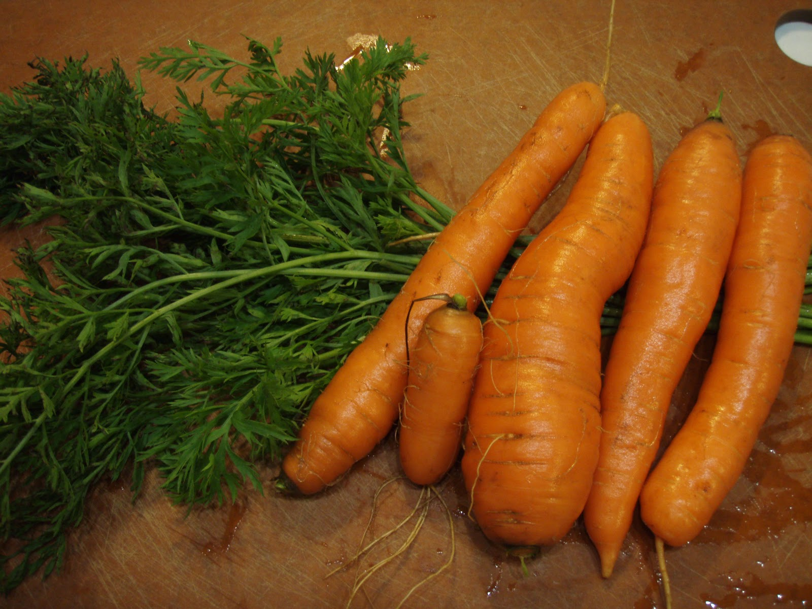 Carrot tops edible nutritional crafts