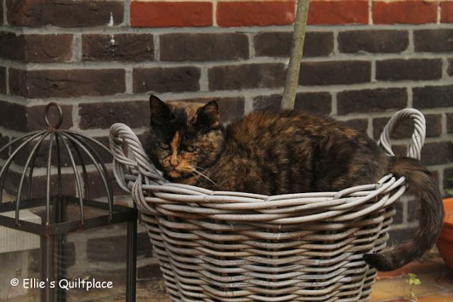 Ellies-Quiltplace-Jefke-cat