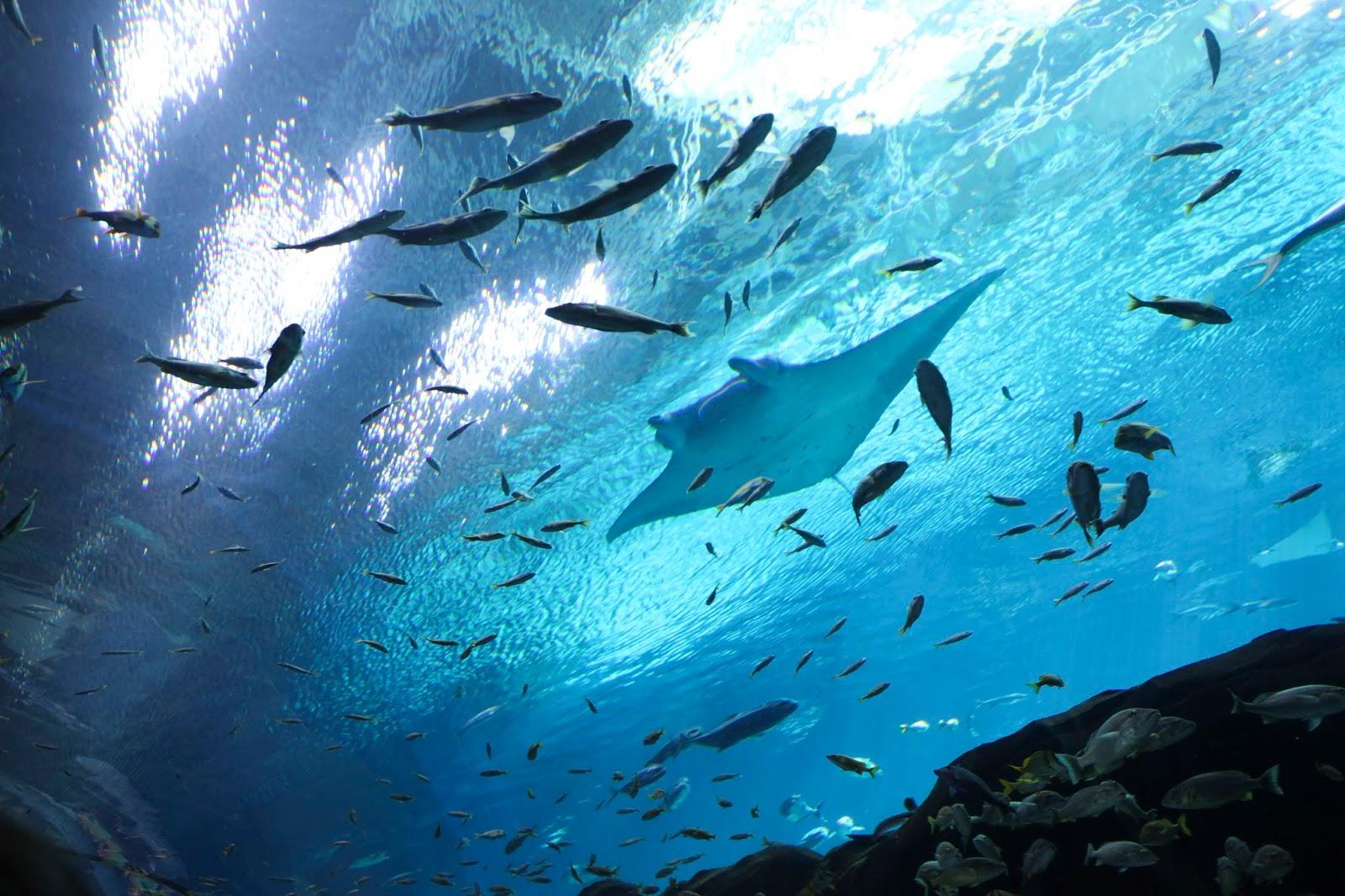 under water tunnel in the Georgia Aquarium
