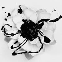 [2011] - White Lotus