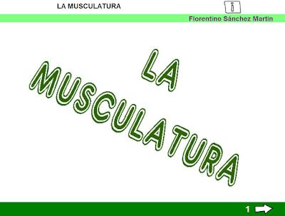 http://ceiploreto.es/sugerencias/cplosangeles.juntaextremadura.net/web/curso_3/naturales_3/musculatura_3/musculatura_3.html