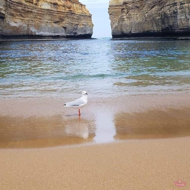 Roteiro de viagem de 20 dias pela Austrália.
