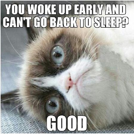 Funny Good Night Cat Meme imgae