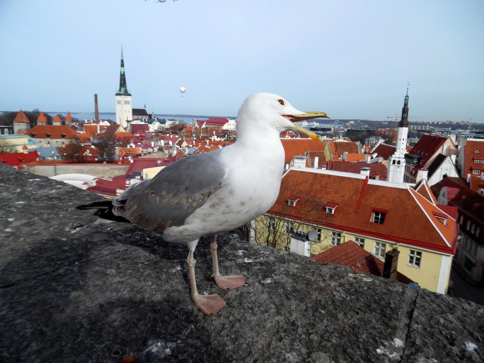 randki Tallinna Trzecia baza randkowa mądra