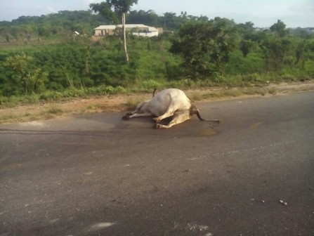 Photos: Two Die In Accident Caused By Herdsmen In Early Hours Of This Morning