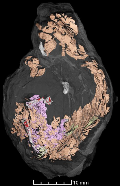 3-D scanning methods allow an inside look into fossilized feces