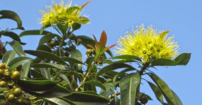 Future Plants By Randy Stewart Eucalyptus