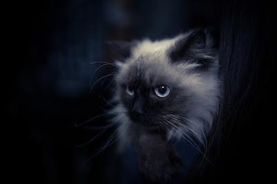 猫_魔術4