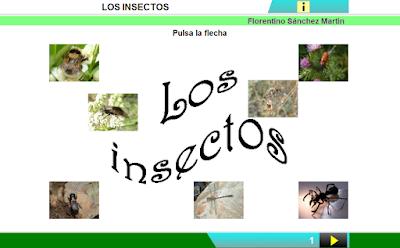http://www.ceiploreto.es/sugerencias/cplosangeles.juntaextremadura.net/web/curso_3/naturales_3/insectos/insectos.html