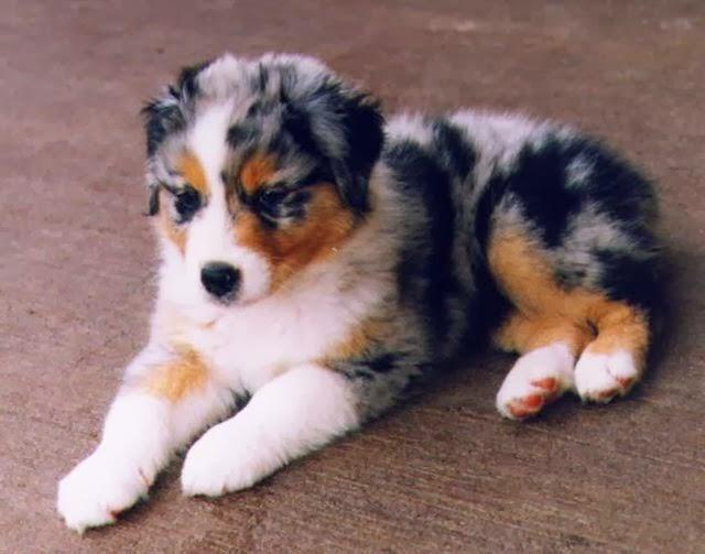 Free Medium sized dog breeds . Download Medium sized dog breeds to ...