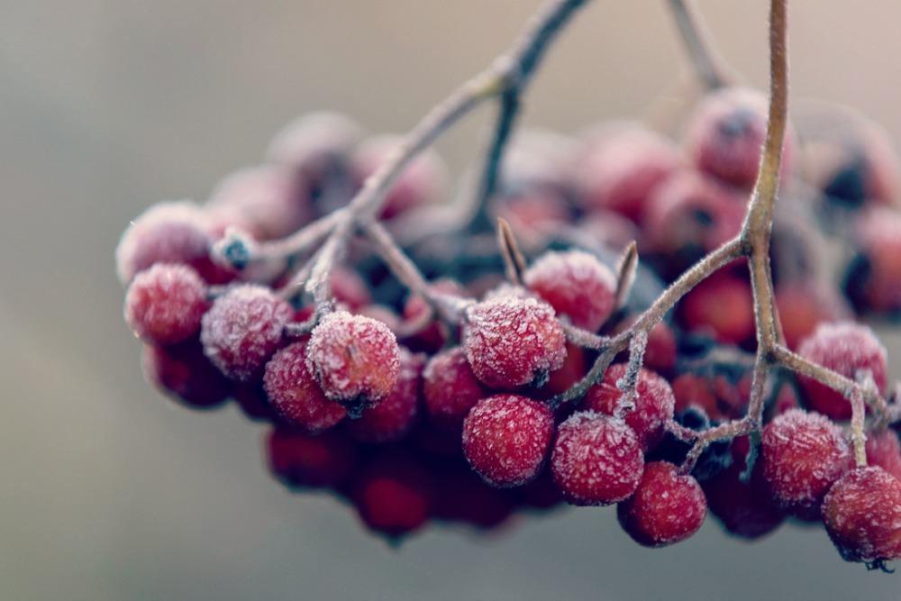 luonto, nature, outdoorphotography, suomi, finland, winter, fall, frost, Visualaddict, Frida Steiner, valokuvaaja, Kirkkonummi, maisema, kuura, huurre, pihlajanmarjat