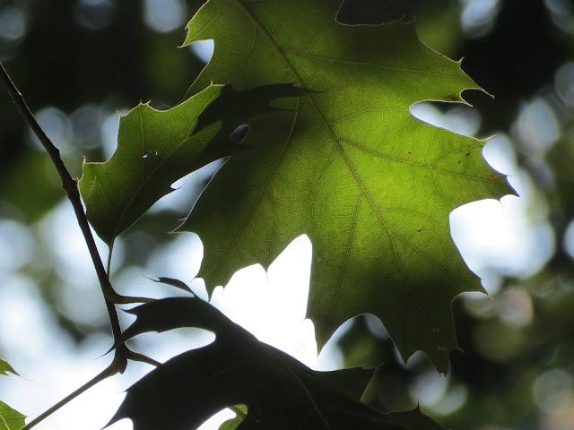Verde que te quiero verde, Beatriz 2012