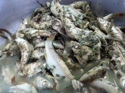 Ikan enselai pansuh