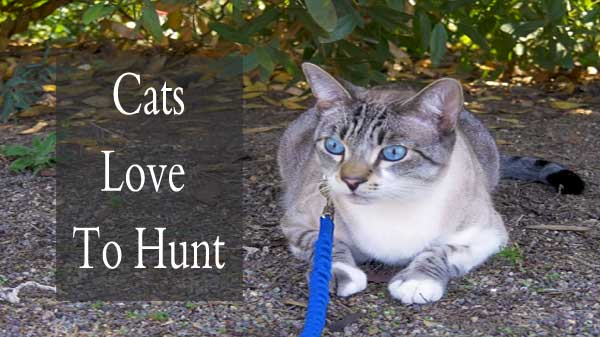 Cats love to hunt: it's in their genes