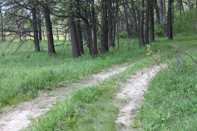 Trail at Nachusa Grasslands