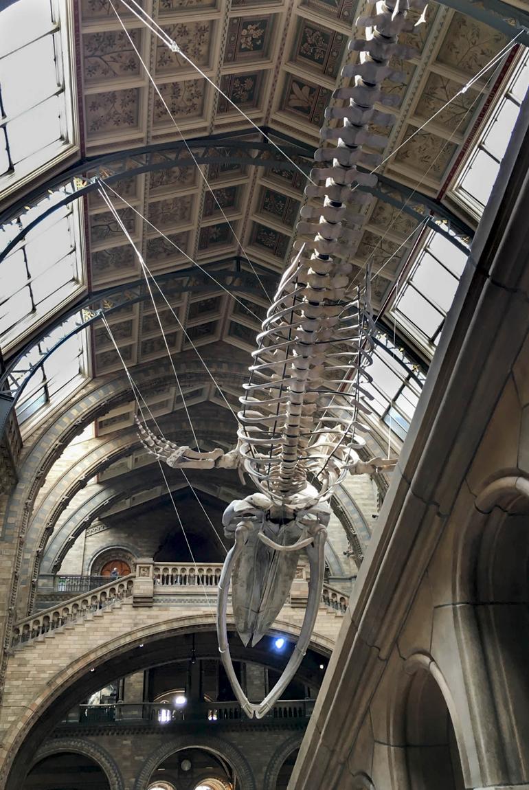 Londres-en-familia-Natural-History-Museum