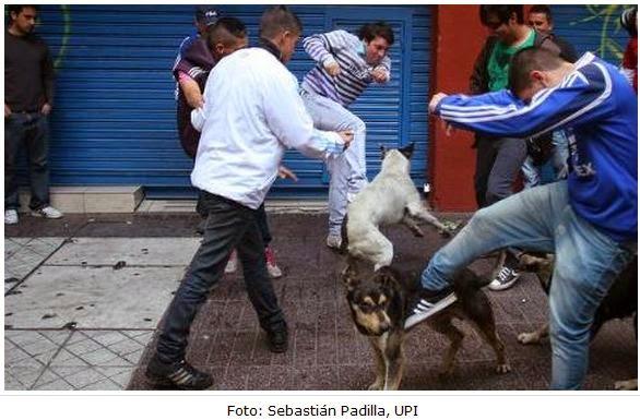 Nena Muerta Por Rot Wailer: El Maltrato Animal: No Más Bullying A Los Animales