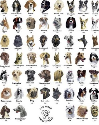 Mini Dog Breeds