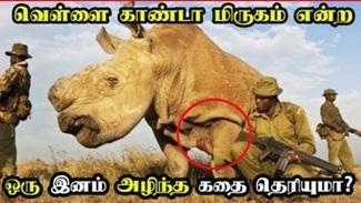 Last male of the white rhinoceros died