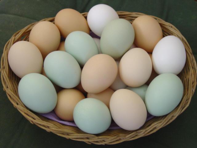 Eggs Magic - 4 Awesome Magic Tricks