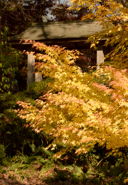 Gibbs Gardens Japanese Maple Tree Festival 2016
