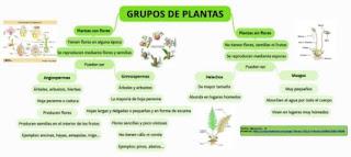https://www.goconqr.com/es-ES/p/261546-GRUPOS-DE-PLANTAS-mind_maps