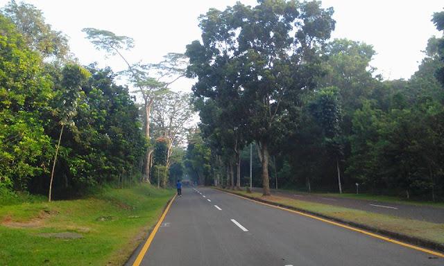 Pentingnya Keberadaan Hutan Kota